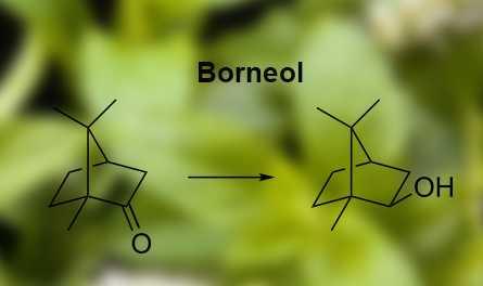 Công thức hóa học của Borneol