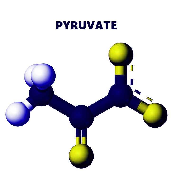 Pyruvate là gì? Công dụng của pyruvate trong thuốc giảm cân