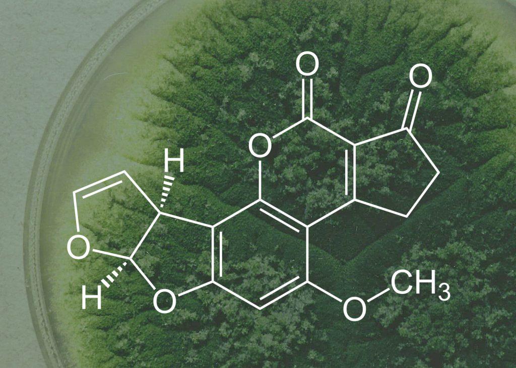 Aflatoxin là gì
