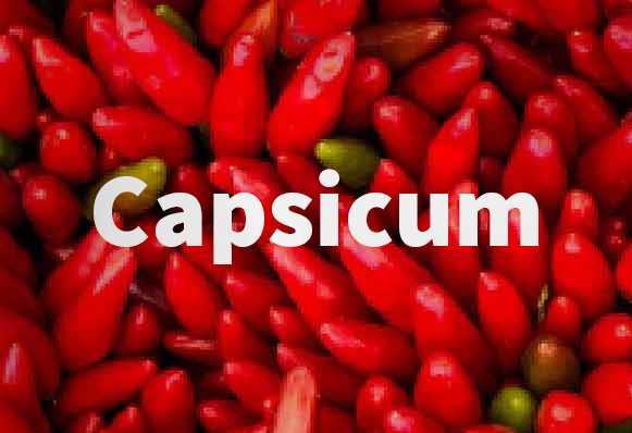 Capsicum oleoresin là gì