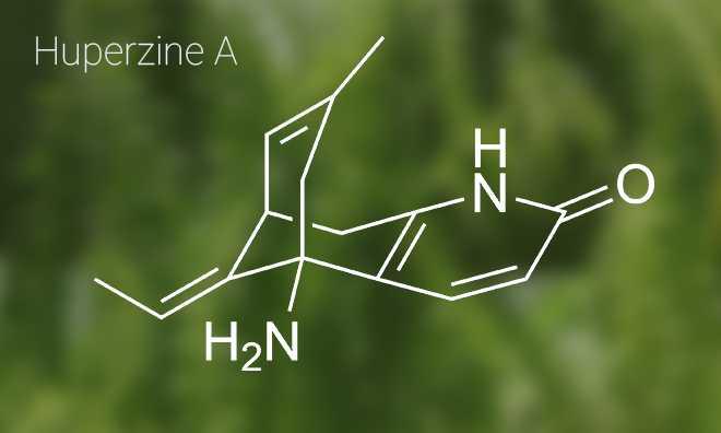 Huperzine A là gì